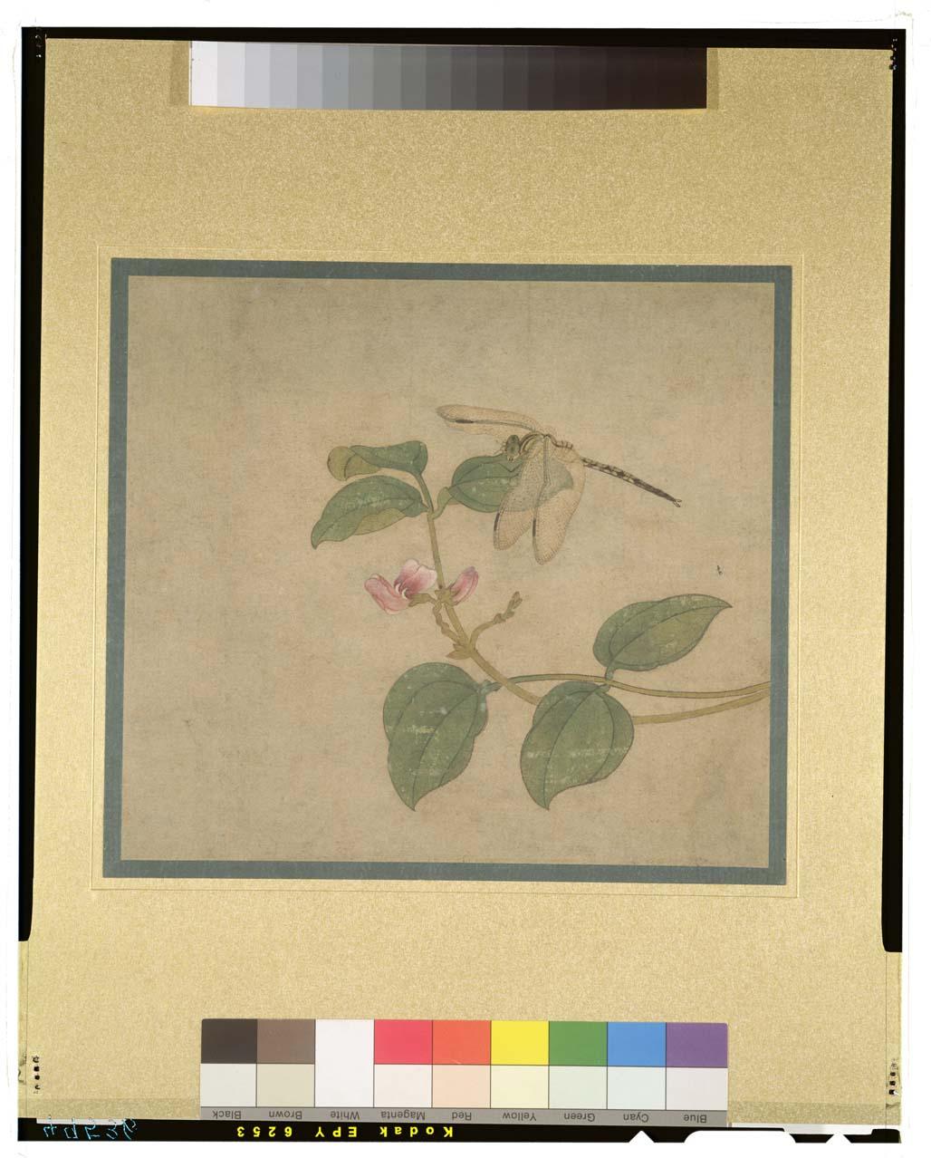 C0049536 唐絵手鑑筆耕園_蜻蜒図 - 東京国立博物館 画像検索